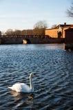 Лебедь на зоне замка Frederiksborg на Hillerod Стоковое Изображение