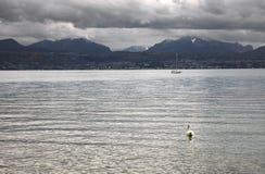 Лебедь на озере женевское озеро Leman Стоковые Изображения RF