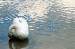 Лебедь на озере, тонкие волны Стоковое Фото