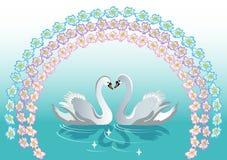 лебедь предпосылок Стоковая Фотография RF