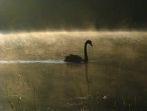 Лебедь самостоятельно Стоковое фото RF