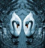 лебедь III Стоковые Фото