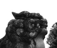 Лев виском Стоковое фото RF