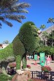 Лев в вегетации на садах Буша Стоковые Изображения