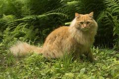 Лев кота стоковое фото rf