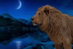 Лев на озере ночи под луной и обоями звезд Стоковое Фото