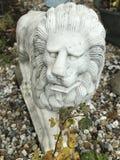 Лев на предохранителе Стоковая Фотография
