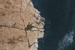 Лев утеса Стоковые Изображения RF