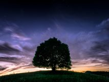 Легендарное единственное дерево II стоковая фотография