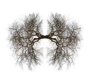 Легкие дерева Стоковые Изображения