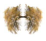 Легкие дерева Стоковые Фото