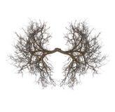 Легкие дерева Стоковое Фото