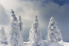 легко редактируйте изображение к зиме вектора валов стоковые фото