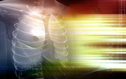 легкя человека тела Стоковое Изображение
