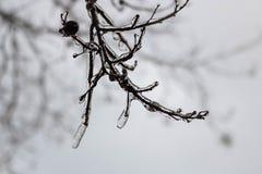 Ледистое дерево во время шторма зимы Стоковые Изображения