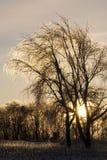 Ледистое дерево и восход солнца Стоковые Изображения