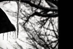 Ледистое дыхание от января стоковая фотография rf