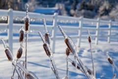 Ледистые ветви дерева и ледистый снеговик Стоковое Изображение RF
