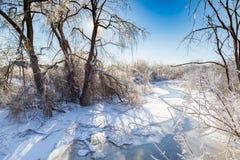 Ледистые ветви дерева и ледистый снеговик Стоковое Фото