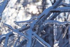 Ледистые ветви дерева и ледистый снеговик Стоковые Изображения