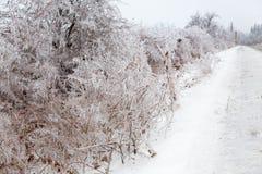 Ледистые braches дерева Стоковое Изображение