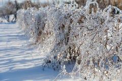 Ледистые braches дерева Стоковые Изображения RF