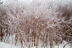 Ледистые braches дерева Стоковое фото RF