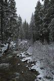 Ледистый поток с снежными соснами стоковое фото rf