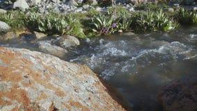 Ледниковые подачи воды в максимум ручья в горах видеоматериал