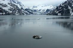 ледник залива Аляски внутри прохода национального парка Стоковая Фотография