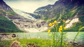 Ледник и озеро Boyabreen в Норвегии Стоковые Фото
