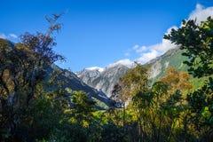 Ледник Frantz Josef и дождевой лес, Новая Зеландия стоковое изображение rf