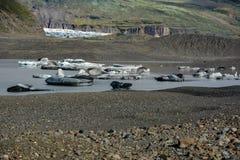 Ледник Skaftafellsjokull с утесами и лед в реке, в Skafta Стоковое фото RF