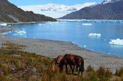 Ледник Steffen в поле льда Campo de Hielo Sur южном патагонском, чилийской Патагонии Стоковые Изображения RF