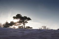 ледовитый Лапландии природы русский северно Заход солнца Зима стоковая фотография