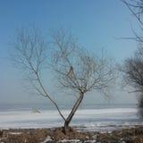 Ледяной день стоковое изображение rf