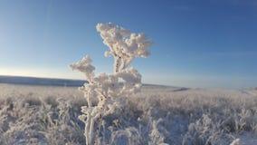 Ледяные кристаллы на траве, льде зимы и замерли водой, который абстрактной естественной красоте, траве покрытой с замороженным сн Стоковые Изображения