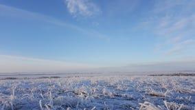 Ледяные кристаллы на траве, льде зимы и замерли водой, который абстрактной естественной красоте, траве покрытой с замороженным сн Стоковое Изображение RF