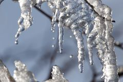 Лед от дерева в природе Стоковое Изображение RF