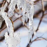 Лед от дерева в природе Стоковое Фото