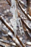 Лед от дерева в природе Стоковые Изображения RF