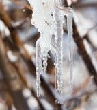 Лед от дерева в природе Стоковые Фото