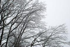 Лед покрыл ветви дерева стоковая фотография