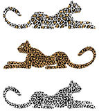 лежать гепарда Стоковое Изображение RF