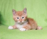 Лежать котенка имбиря стоковое фото