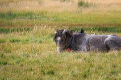 лежать лошади травы стоковая фотография rf