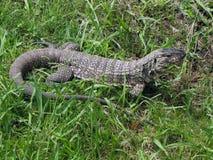 Лежать на траве. Стоковое Изображение RF