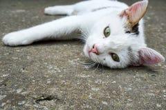 Лежать домашней кошки Стоковые Фото