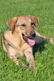 лежать травы собаки стоковая фотография rf