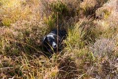 лежать травы собаки стоковые изображения rf
